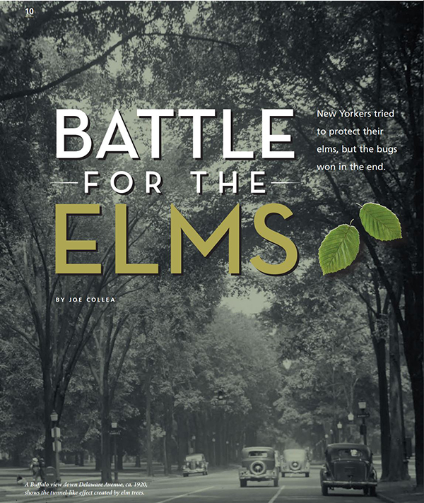 Battle for the Elms Article