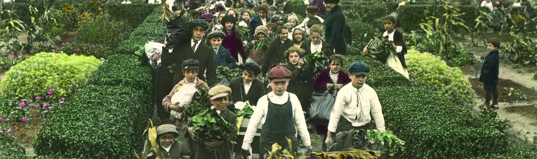 Children Gathering Harvest from Victory Gardens